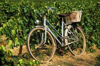 vignoble vélo